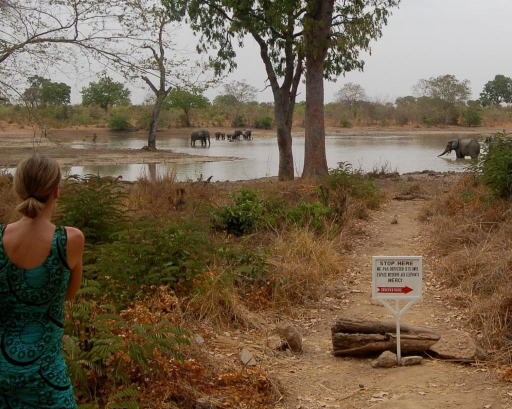 Sundae enjoying the elephants at Nazinga Game Reserve, Burkina Faso