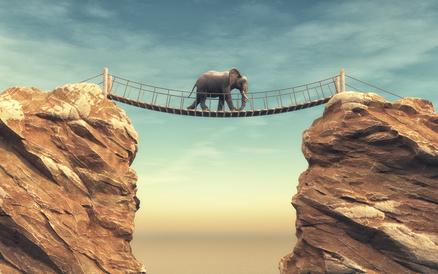 Elefanten zähmen